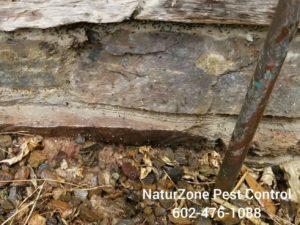 scottsdale termites