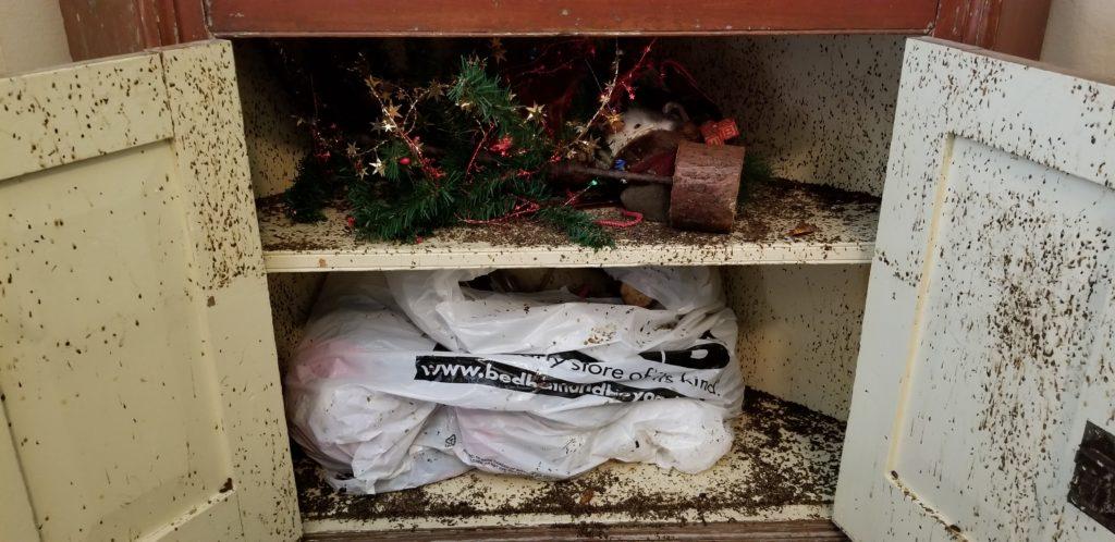 Sewer Roaches, American Roaches, Cockroaches, Phoenix Exterminators, Scottsdale Exterminators, Pest Control