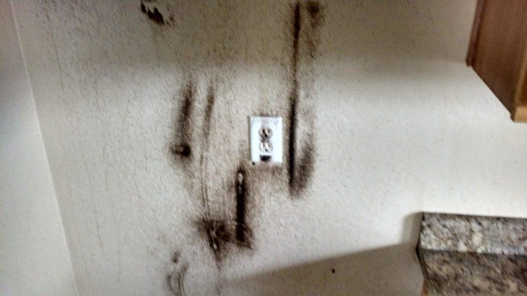 Phoenix German Roach Treatment, Scottsdale Pest control