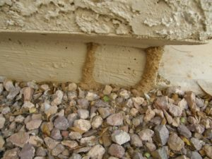 Scottsdale termites, Phoenix Termites